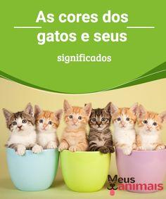As cores dos gatos e seus significados  Uma das principais #características dos #gatos é a incrível variedade de #cores disponíveis. É comum encontrar gatos de diversas cores dentro da mesma ninhada, sejam os gatos #mestiços ou não. #CURIOSIDADES