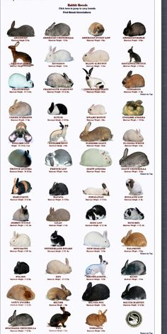 Rabbit breeds recognized by the American Rabbit Breeds Assoication- except the newest breed as of November 2013 (the loinhead)