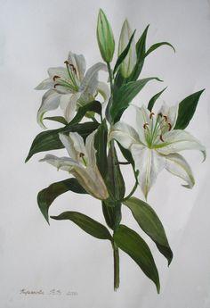 Viktoria Kiryanova (b.1977) —  A Branch of White Lilies, 2008  (547x800)