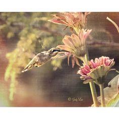 Hummingbird Photograph, Hummingbird Home Decor, pastel Hummingbird,... ($17) ❤ liked on Polyvore featuring home, home decor, wall art, photographic wall art, photography wall art, textured wall art, bird home decor and photo wall art