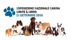 Esposizione nazionale canina per la prima volta a Limite sull'Arno…