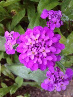 Skabiose Inspiration Boards, Wedding Inspiration, September, Gardening, Plants, Garten, Lawn And Garden, Plant, Yard Landscaping