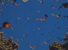 Butterfly migrations - My Gardening Tips 2019 Aesthetic Movies, Music Aesthetic, Aesthetic Images, Aesthetic Videos, Aesthetic Grunge, Aesthetic Vintage, Aesthetic Photo, Aesthetic Pastel Wallpaper, Aesthetic Wallpapers