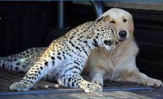 Amigos de Verdade Sempre Estarão com a Gente!