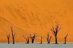 "Nature Finalist: 1st Category Winner Marsel van Oosten""The Valley Of Death"""