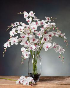 Phalaenopsis Orchid Silk Flower Stems for Casual Decorating at Petals Orchid Flower Arrangements, Beautiful Flower Arrangements, Flower Vases, Beautiful Flowers, Artificial Plants And Trees, Artificial Flowers, Faux Flowers, Silk Flowers, Giant Flowers