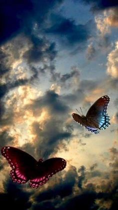 Butterflies flying in the almost stormy sky, with sunshine peeking through the…