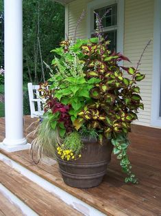 Image result for patio flowers in pots