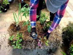 Balas de paja para que tus plantas luzcan más bellas