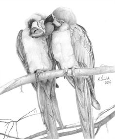 Parrots by kswistak on DeviantArt Drawing Projects, Sketch Inspiration, Art Drawings, Animal Drawings, Wood Crafts, Sketches, Deviantart, Parrots, Tattoos