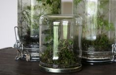 terrariums charcoal,sand, gravel jar with lid, potting soil,moss and small plants