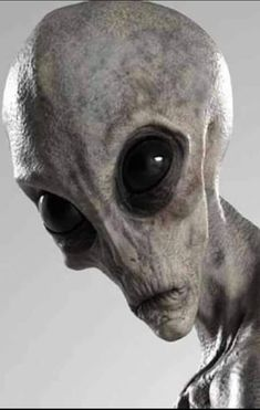 Aliens Und Ufos, Les Aliens, Ancient Aliens, Alien Creatures, Fantasy Creatures, Alien Pictures, Ufo Tattoo, Alien Drawings, Grey Alien