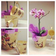 #maceta #regadera #orquídea