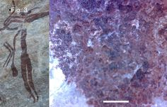 """Living pigments in Australian Bradshaw rock art: """"This art is estimated by indirect methods at between 46 000 years ago, based on the time of extinction of depicted live megafauna (Roberts & Brook 2010), and 70 000 years ago."""" See also comment at http://www.aboriginalartnews.com.au/2011/01/discovery-of-living-pigments-in-bradshaw-rock-art.php"""