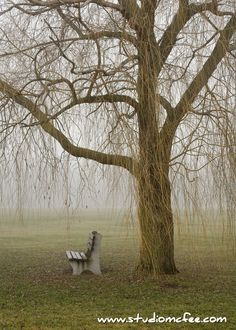 'Under a Willow Tree' - Guelph, Ontario, Canada
