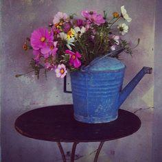 Statigram – Instagram flowers villa augustus
