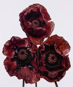 Irving Penn, iconic still life and fashion photographer, has a new display at Hamilton Galleries in London, and it's stunning! #‎fineart