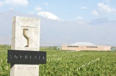 Finca Sophenia´s entrance. Valle de Uco/ Mendoza (detalles de la obra en: http://www.bormidayanzon.com.ar/bodegas/sophenia)