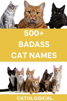 If you have recently acquired a new kitty, giving them a badass name is a perfect way to honor just how rebellious and feisty cats are. #catnames #cattips #catlover #newcatnames #kittennames #catideas Unique Cat Names, Cute Cat Names, Unique Cats, Cute Cats And Kittens, Cool Cats, Badass Cat Names, Girl Cat Names, Pretty Cats, Pretty Kitty