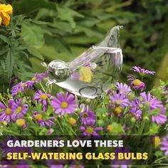 Self-Watering Plant Bulb! 🌿 No need to worry about the plants next time you go on vacation with this stylish self-watering glass bulb. Designed to know the perfect amount of water your plant ne Water Plants, Garden Plants, House Plants, Flowers Garden, Self Watering Plants, Planting Bulbs, Plant Needs, Garden Projects, Gardening Tips