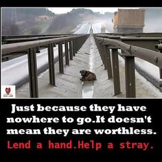 just because they have nowhere to go.....