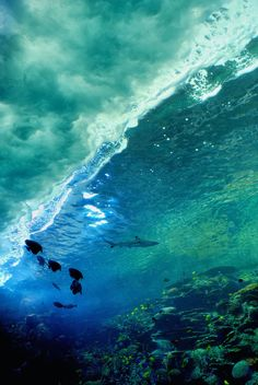 ocean waves with a shark and fish. Under The Ocean, Sea And Ocean, Ocean Beach, Beautiful Ocean, Beautiful World, Amazing Nature Photos, Deep Blue Sea, All Nature, Ocean Life