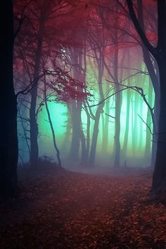 """Forest"" ~ by Gilbert Pape ~ Miks' Pics ""Trees l"" board @ http://www.pinterest.com/msmgish/trees-l/"