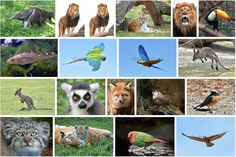 Find many different #wildlife and #animal #images in my portfolio @shutterstock: http://www.shutterstock.com/da/g/dennis+jacobsen?searchterm=wildlife&search_source=base_gallery&language=da&sort=popular&safe=true