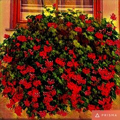 Plants, Red, Image Editing, Pictures, Flora, Plant, Planting, Rouge