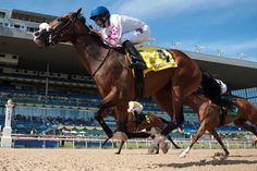 Robert Marzilli's Caren went gate to wire to capture $250,000 Bison City Stakes, second leg of the filly Triple Tiara, July 10, 2016 at Woodbine.