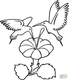 Two Hummingbirds Drinks Flower Nectar Coloring Page From Category Select 27298 Printable Crafts Of Cartoons Nature Animals