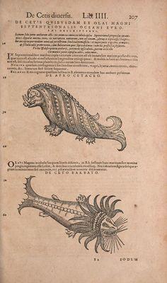 Conradi Gesneri medici Tigurini Historiae animalium liber IV : - Biodiversity Heritage Library   Sea monsters! ca. 1500's