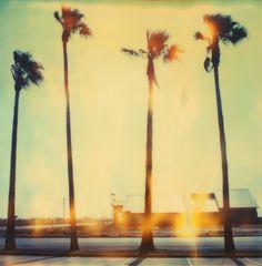 Palm Tree Restaurant - Stefanie Schneider - Tableaux, photographie, art photographique en ligne chez LUMAS