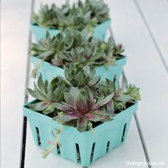 After you finish your afternoon snack, use your baskets as a planter. Since they have built-in drainage on the bottom, succulents will be almost impossible to over-water.