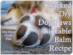 This Cracked Dry Dog Paws Lickable Balm Recipe is just what a good pet owner needs to whip up a moisturizing batch to massage into their dogs paws (feet). Just like people, dogs can suffer the same effects on the pads of feet that people do from the hot and cold temperatures. So when people have dry and cracked skin