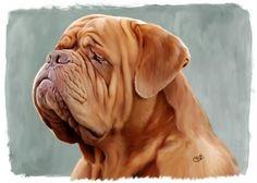 beautiful dogue!