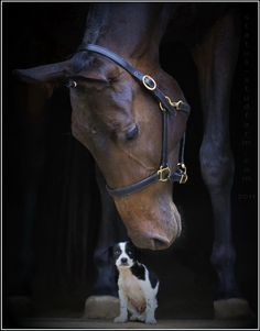 Puppies and ponies love so hard | How Do It