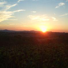 Sirolo: tramonto su un campo di girasoli