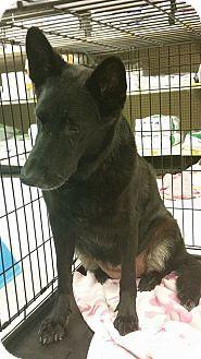 Houston, TX - German Shepherd Dog Mix. Meet Hope, a dog for adoption. http://www.adoptapet.com/pet/13034147-houston-texas-german-shepherd-dog-mix