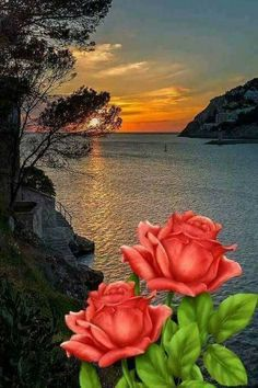 HASTA MAÑANA AMIGOS BESOSS PARA TOD@S 💙🙋 - Isabel Carrasco - Google+ Good Morning Beautiful Pictures, Beautiful Photos Of Nature, Beautiful Flowers Wallpapers, Beautiful Nature Wallpaper, Beautiful Moon, Nature Images, Beautiful Roses, Amazing Nature, Beautiful Landscapes