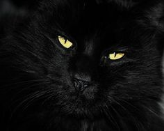 Black Cat Photography gorgeous eyescat lovers giftgold eyesGifts under 25cat lovers home decorgoldencloseup of black cat black cat (8.00 USD) by VanillaExtinction