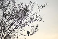 Spring Silhouette Signed Print, Bird and Tree Photo, Gray, Beige and Black Decor, Color Fine Art Photography Wall Print