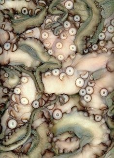 Octopus tenticles, light olive green & flesh pearl pink