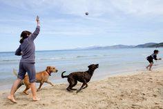 Page recherchée non trouvable Education Canine, Rappelling, Akita, Pets, Animals, Oslo, Merlin, Maya, Board