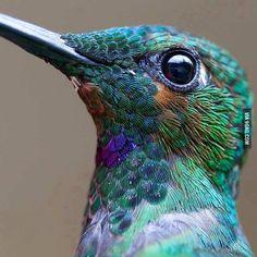 Pinne es mal für dich, Liebes :D Ein Kolibri vom Nahen... echt schön!