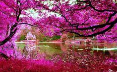 Amazing pink