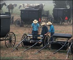 AMISH AUCTIONS - Google Search