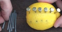 Nie mehr gehe ich ohne Nägel und Zitrone aus dem Haus.