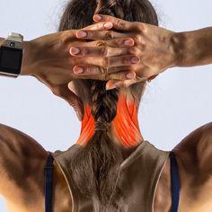 Mi a banyapúp, és hogyan kell helyrehozni (Ez nem csak a testtartásodról szól) Posture Fix, Bad Posture, Improve Posture, Back Hump, Sternocleidomastoid Muscle, Posture Exercises, Kyphosis Exercises, Increase Muscle Mass, Muscular System