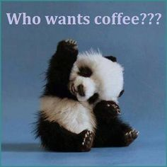 who wants coffee quotes cute quote coffee morning panda coffee humor | Come to Bagels and Bites Cafe in Brighton, MI for all of your bagel and coffee needs! Feel free to call (810) 220-2333 or visit our website www.bagelsandbites.com for more information! #coffeequotes